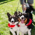 POD2018 02 Dogs, Kazoo & Koosh-DSC 0125