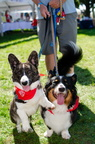 POD2018 02 Dogs, Kazoo & Koosh-DSC 0126