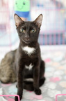 POTD2017 Cats-PhotogPick-DSC 0055-LR Export