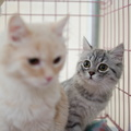 POTD2017 Cats-PhotogPick-DSC 0100-LR Export