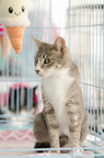 POTD2017 Cats-PhotogPick-DSC 0162-LR Export