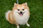POTD2017 Dogs-PhotogPick-DSC 0229-LR Export